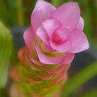 Flowering ginger by Helenvandy