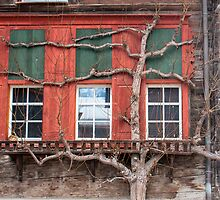 Tree growing up a farmhouse by Michael Brewer