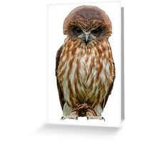 Billy the Boobook Owl Greeting Card