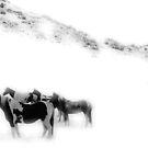 Lost in the Fog by Rachel Sonnenschein