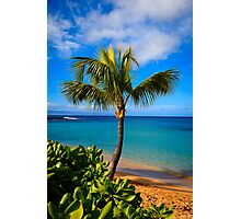 Napili Beach Palm Tree Photographic Print