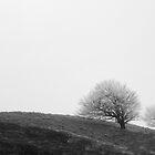 Blaen Bran (Coed Gwain Y Fferiad) - 004 B&W by Paul Croxford