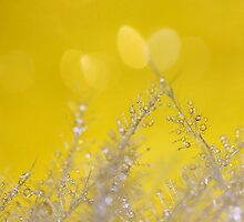 Yellow Sparkles by KUJO-Photo