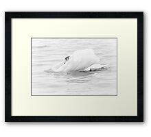 Innocence is only feather deep Framed Print