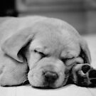 Sleepy Puppy  by rmcbuckeye