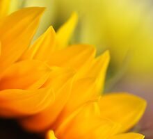 Sunflower by Elena Neustroeva