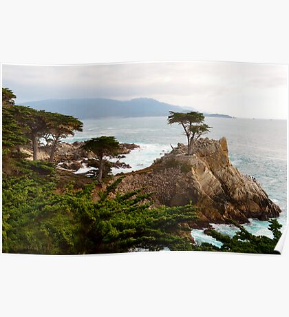Lone Cypress Large Poster
