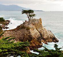 Lone Cypress by BarbaraSnyder