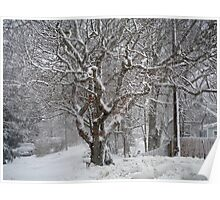 The mighty oak dressed in snow ~ Poster