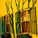Shadows of the Crepe Myrtle by Wendy Mogul