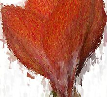 Red Amaryllis Opening by JimPavelle