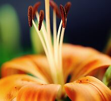 Flower Lily by Falko Follert