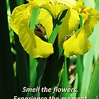 Smell The Flowers by Wendy Meg Siegel
