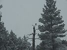 Eagle Perch by BettyEDuncan