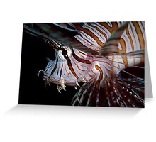 Young Lionfish Greeting Card