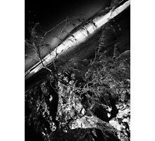 Survival... Photographic Print