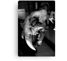 Sabre-toothed Cat Skull Canvas Print