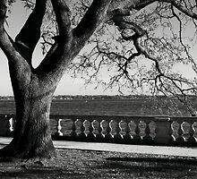 Live Oak River View by Carol Bailey White