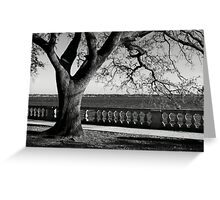 Live Oak River View Greeting Card