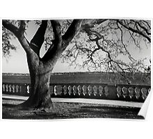 Live Oak River View Poster