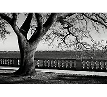 Live Oak River View Photographic Print