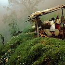 Colombian Road Stand by Larry3