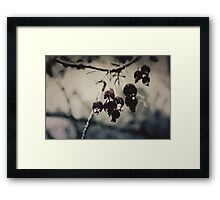 Old Permafrost Framed Print