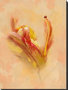 The Lady And The Parrot Tulip by Diane Schuster