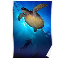Turtle Diver Poster