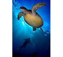 Turtle Diver Photographic Print