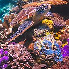 Turtle Reef by ZeamonkeyImages