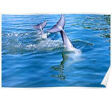 Dolphin tails Poster