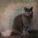 Barn cat by Lynn Starner