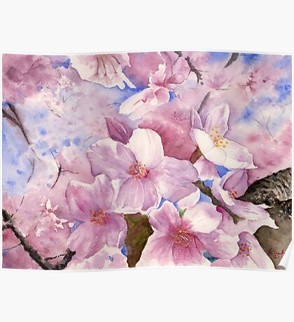 Cherry Blossom , Sakura , Art Watercolor Painting print by Suisai Genk Poster