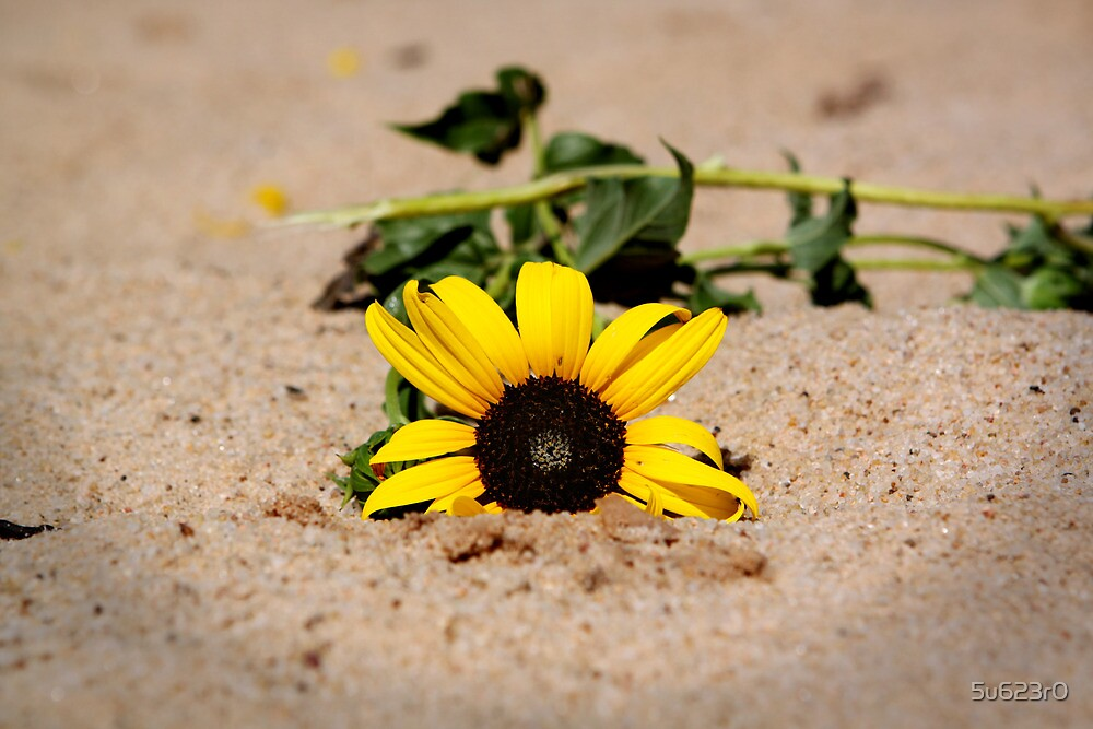 Sunflower in Sand by 5u623r0