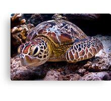 Turtle of Paradise Canvas Print