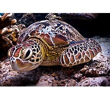 Turtle of Paradise Photographic Print