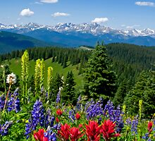 Wildflowers with Distant Snowy Mountains  by Michael Andersen