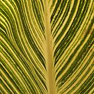 Leaf Lines by AngelaHumphries