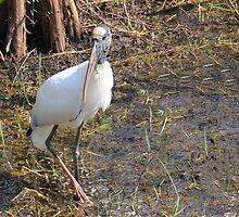 Wood Stork in a Florida Swamp by Rosalie Scanlon