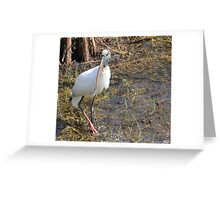 Wood Stork in a Florida Swamp Greeting Card