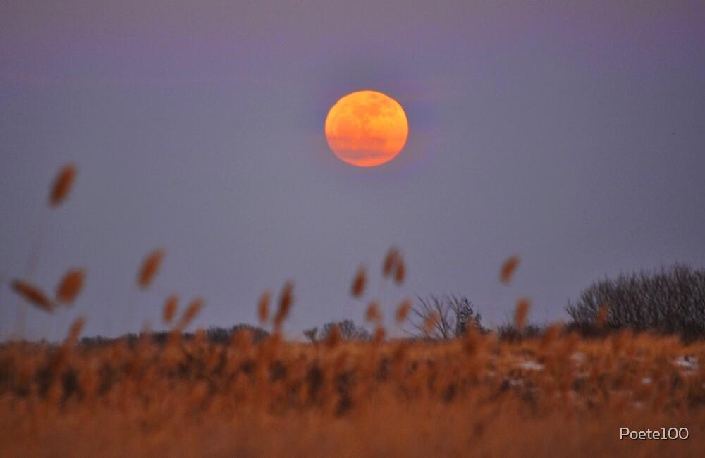 Wolf Moon - January Moon  by Poete100