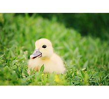 Happy-Go-Ducky Photographic Print