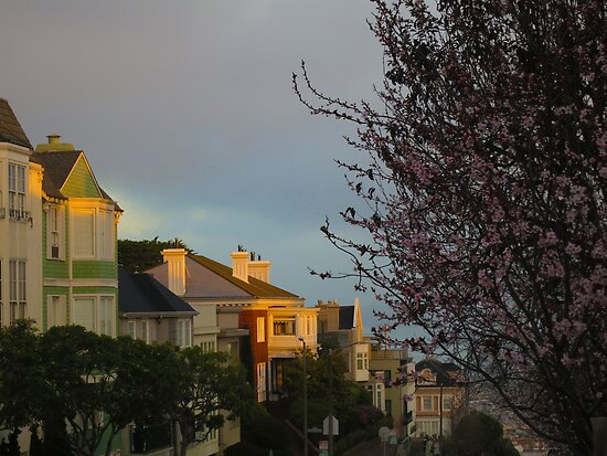Blossoms in Pacific Heights by David Denny