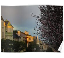 Blossoms in Pacific Heights Poster