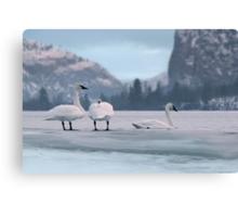 Trumpeters on Swan Lake  Canvas Print