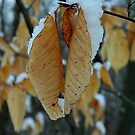 Snowy leaves by jammingene