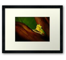 Playing cute Framed Print