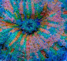 Ricordea Galaxy by guinapora