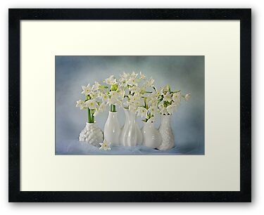 Narcissus 'Paperwhites' by Jacky Parker